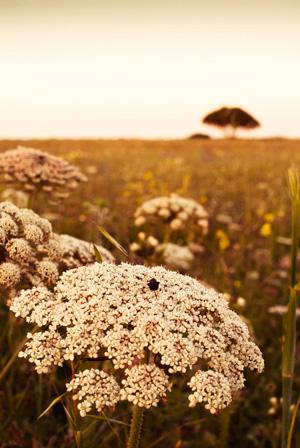 Flora en Formentera