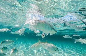Peces en aguas cristalinas de Es Trucadors