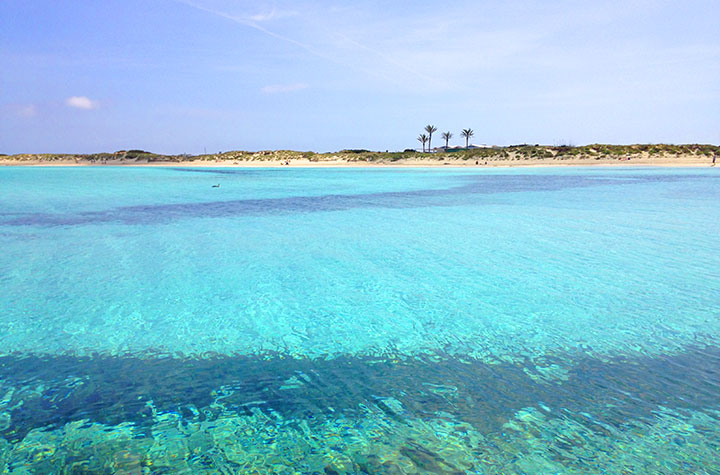 Posidonia en Illetes Formentera