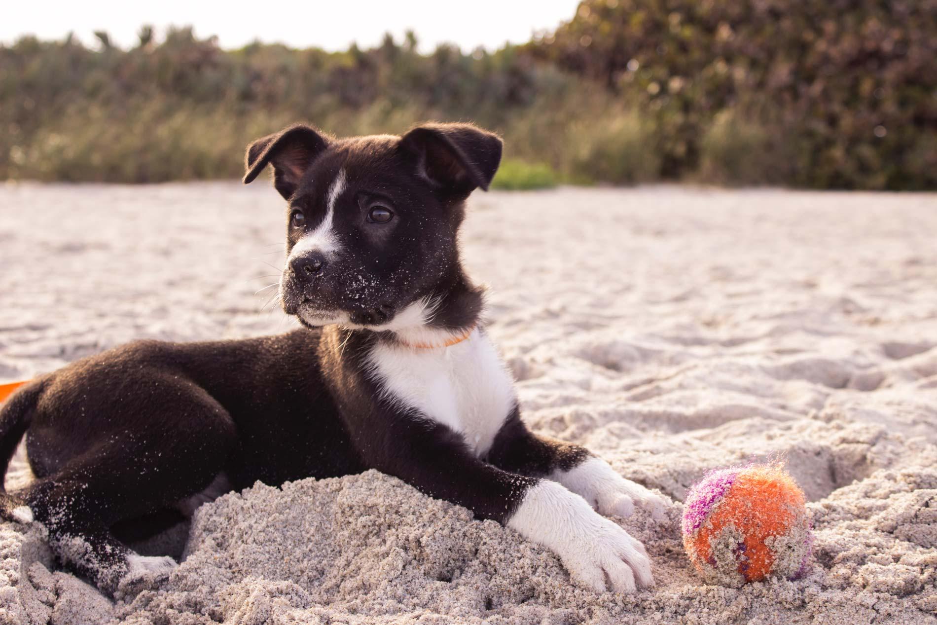 Hoteles para mascota en Formentera